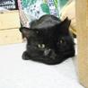 ゴミを漁っていた元飼い猫★今度こそ幸せに サムネイル3