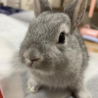 ミニウサギ(再募集)