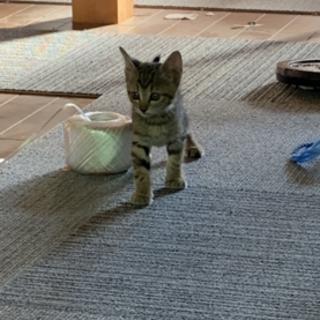 2ヶ月の女の子猫ちゃん!