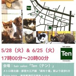 5月28日(火) 麻布十番ナイター里親会(ボランティアも募集中)