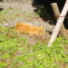 大学生〔猫サークル〕の解散について