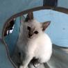子猫の里親さん募集 サムネイル2