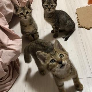 子猫の里親募集中!