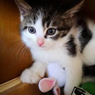生後約1か月半可愛い4兄妹猫です