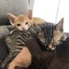 2匹の猫ちゃんの里親になりました