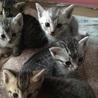 空き家にて子猫保護