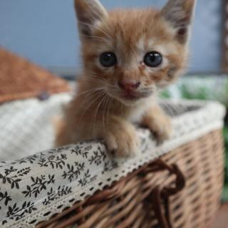 タレ目! 生後1か月の子猫