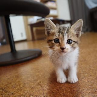おっとりした生後1か月の子猫