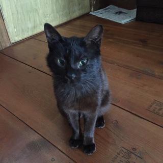 いつでもどこでも誰にでも♡ゴロゴロ癒しの黒猫くん