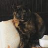 美形でツンデレなサビ猫ラン