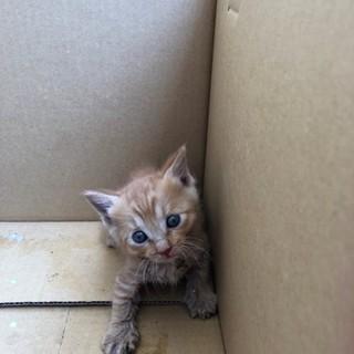 生後1か月程度の子猫