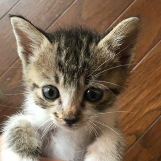 2019/4/17生まれの子猫6匹です。