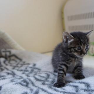 4月25日生まれの可愛い子猫の里親募集