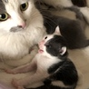 母猫と仔猫の里親さん募集してます!