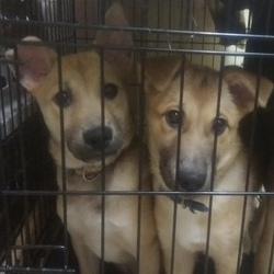 6月9日に愛知県蒲郡市で犬猫の譲渡会