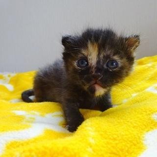 生後1ヵ月の子猫