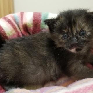 生後1ヵ月の子猫です