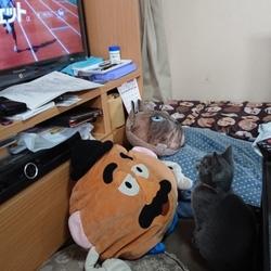 テレビ見てるにゃ~