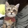 野良猫の子猫保護 至急!