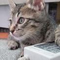 人懐っこい子猫「うじょう」くん