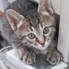 人懐っこい子猫「うじょう」くん サムネイル3