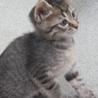 人懐っこい子猫「うじょう」くん サムネイル4