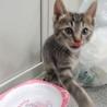 人懐っこい子猫「うじょう」くん サムネイル7