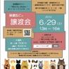 藤井寺市保護猫譲渡会