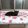 ちょっとモヒカンな黒猫ココアくん サムネイル3