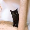 ちょっとモヒカンな黒猫ココアくん サムネイル5