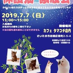 7/7(日)七夕 保護猫譲渡会 in タマコチ
