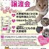 保護猫の譲渡会 福岡県大野城市 福岡ねこともの会