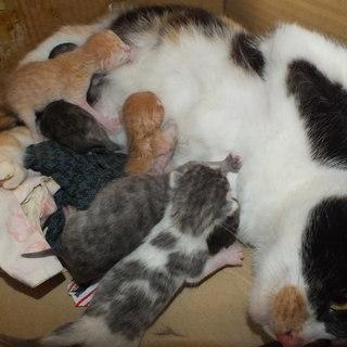 4月20日生まれ、生後1か月の子猫5匹♂♀