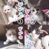 ふわふわ子猫4兄弟