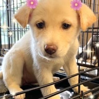個体番号:W352 可愛い子犬