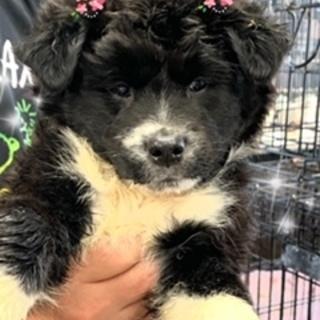 個体番号:W341 可愛い子犬