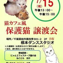 7/15(祝)猫カフェ風保護猫譲渡会in 根本ダンススタジオ