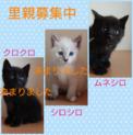 3姉妹(*^^*)