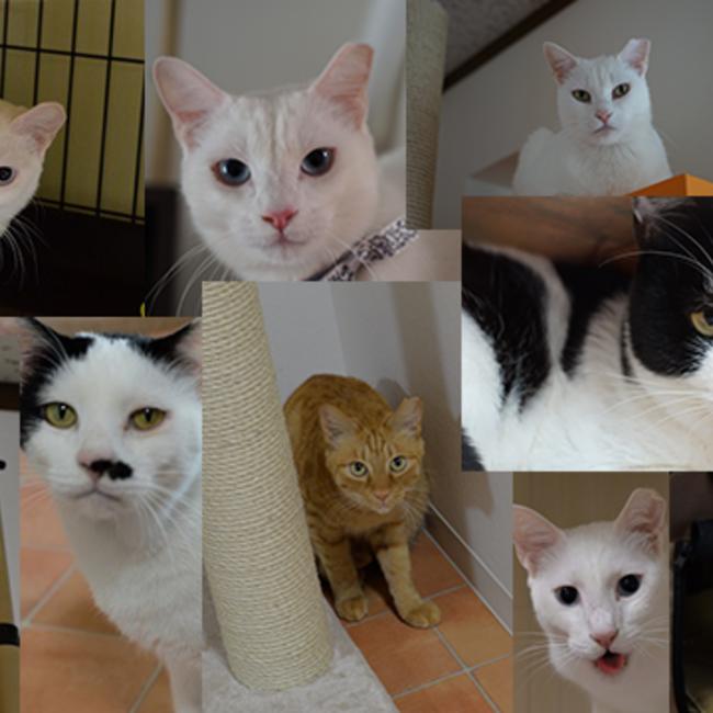 保護猫カフェCatioのカバー写真