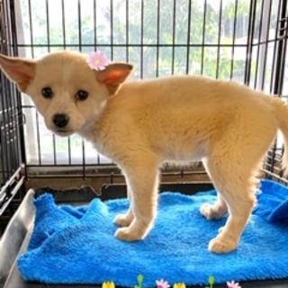 個体番号:W353 可愛い子犬です。