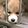 個体番号:W349 小さな小さな子犬です。