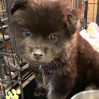 個体番号:M348 モフモフ可愛い子犬