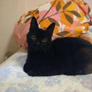 生還した非常に甘えん坊な黒猫