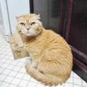 家も飼い主も失い野良猫に★今度こそ本当の幸せを