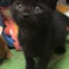 黒猫の男の子②