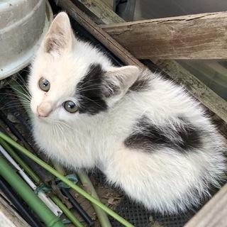 里親様募集!白黒の子猫♀