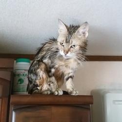 2019.06.02.お風呂に入った4匹の猫たち