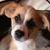 生後3ヶ月 小さめ中型犬 宮古島より