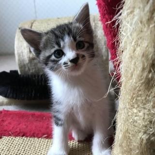 可愛い子猫が家族を探しています