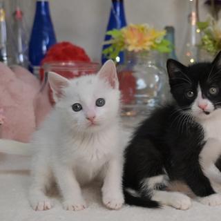 白♀+黒白♂兄弟、ペアで